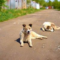 Собака-солнцу улыбака :: Владислав Левашов