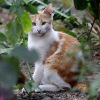 Кошки. :: Slav51T