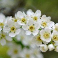 Цветущий май... #7 :: Андрей Вестмит