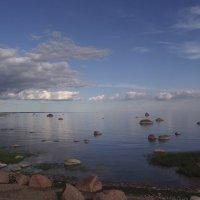 Вечерний Финский залив. :: Татьяна