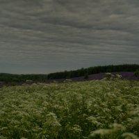 Разноцветье трав :: Aleksandr Ivanov67 Иванов