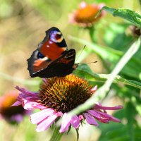Цветок на цветке :: Тамара Бедай