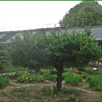 Уголок ботанического сада :: Вера