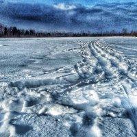 Зимний-суровый день :: Алёна Осипова