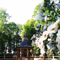 Летний сад в Петербурге. :: Ольга