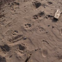 Следы на песке. :: Татьяна