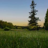 Вечер в лесу :: Александр Попович