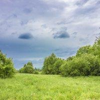 Нежный июнь :: Нина Кутина