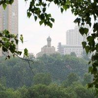 Дождь :: Лариса Рогова