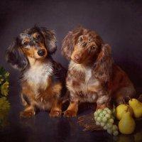 Собаки модели :: Анна Ya