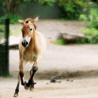 Резвый конь :: Alexander Andronik