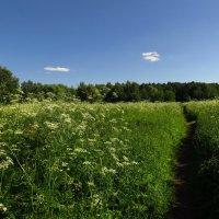 Вот, и лето пришло :: Андрей Лукьянов