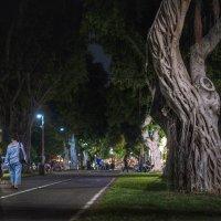 Ночь. Улица. Дерево :: Eddy Eduardo