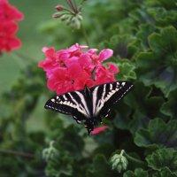 бабочка :: Димончик