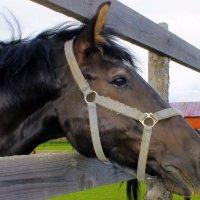 О лошади. :: Валентина ツ ღ✿ღ