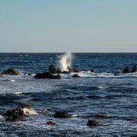 Рифы :: Константин Шабалин