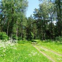 Прогулки по летнему лесу :: Милешкин Владимир Алексеевич