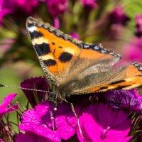 Бабочка :: Екатерина