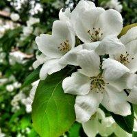 Цветы :: Илья Голубков
