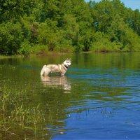 Поплавать, что ли?.. :: Сергей Чиняев