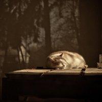 Сладкий сон :: Talika Talika