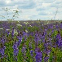 Летние полевые цветы. :: Михаил Столяров