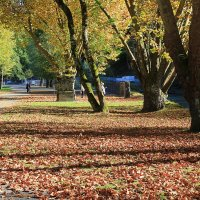 Осень в городе :: Елена Олейникова