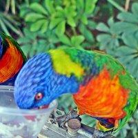 Кормление попугаевазвание :: Лариса