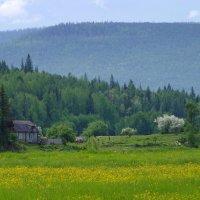 Яблонька цветёт. :: Вера Литвинова
