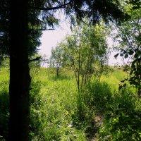 Я из лесу вышел. :: Пётр Беркун