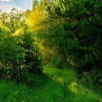 Лучи заката :: Nikolay Svetin
