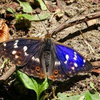 Большие бабочки (переливница) :: Милешкин Владимир Алексеевич