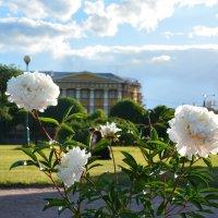 июньские цветы :: Наталия П