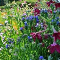 газонные цветы :: tina kulikowa