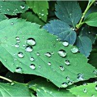 Долгожданный дождь. :: Валерия Комова