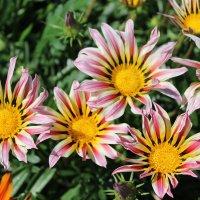 цветы :: tina kulikowa