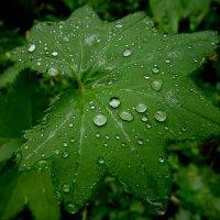 После дождя :: Ирина Via