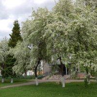 Сибирь цветет. :: Надежда