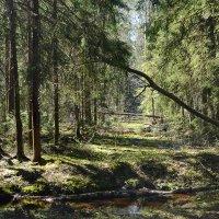 Весенний лес :: Татьяна Бронзова
