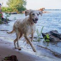 Собачья радость :: Вера Сафонова