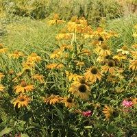 жёлтые цветы :: tina kulikowa