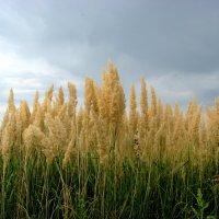 Травы, травы! :: Надежда