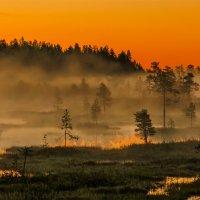 Глубокой, белой ночью, на болоте.... :: Альберт Беляев