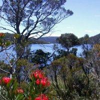о. Тасмания. Большое озеро :: Генрих