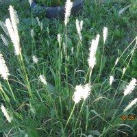травы, лето :: Smit Maikl