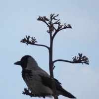 Ворона на дереве. :: Sall Славик/оf