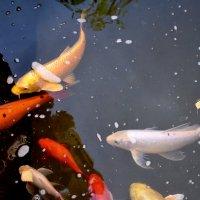 Рыбы :: Ольга Беляева