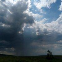 Скоро дождь. :: Наталья А