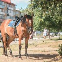Лошадь.... в городе... :: Алексей le6681 Соколов