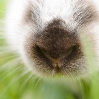 Кролик :: Luba Koba